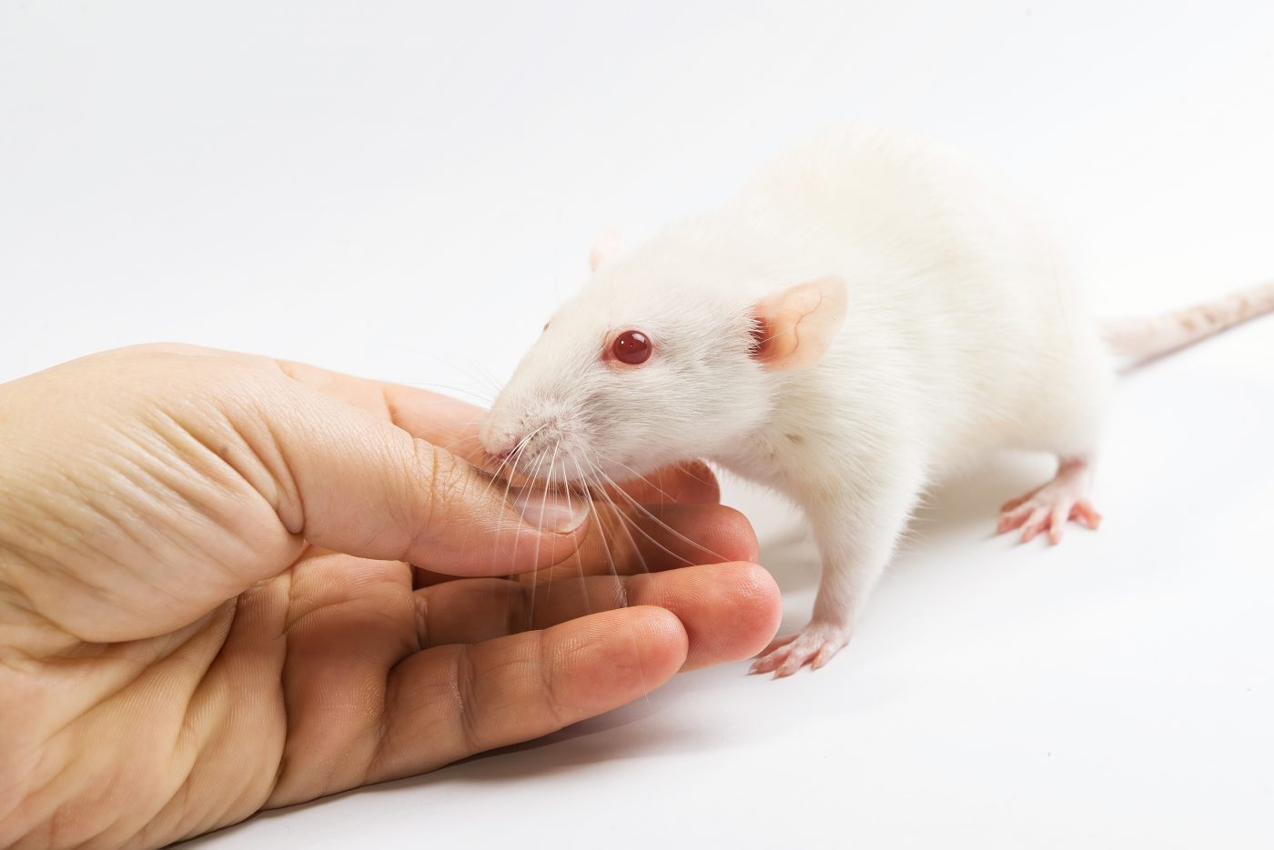 Nanoparticle Drug Approach Proven to be Successful in Reversing Parkinson's-Like Symptoms in Rats
