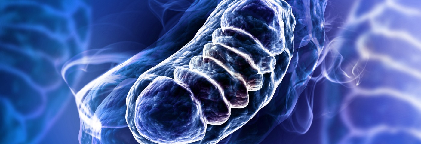 Mitochondria Dysfunction Seen to Play a Role in Parkinson's Disease