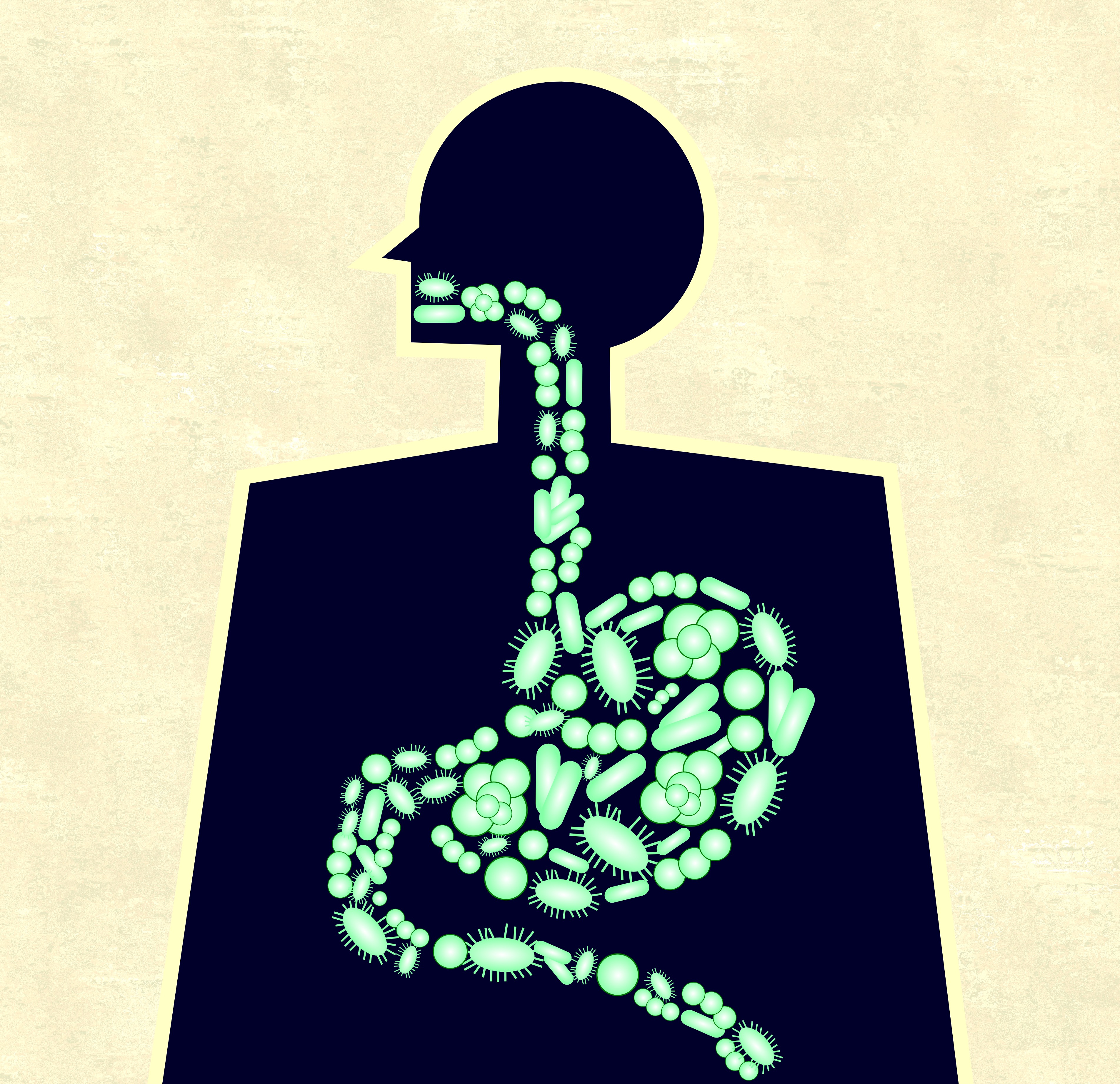 A new gut model allows the study of how gut processes might interfere with brain function.