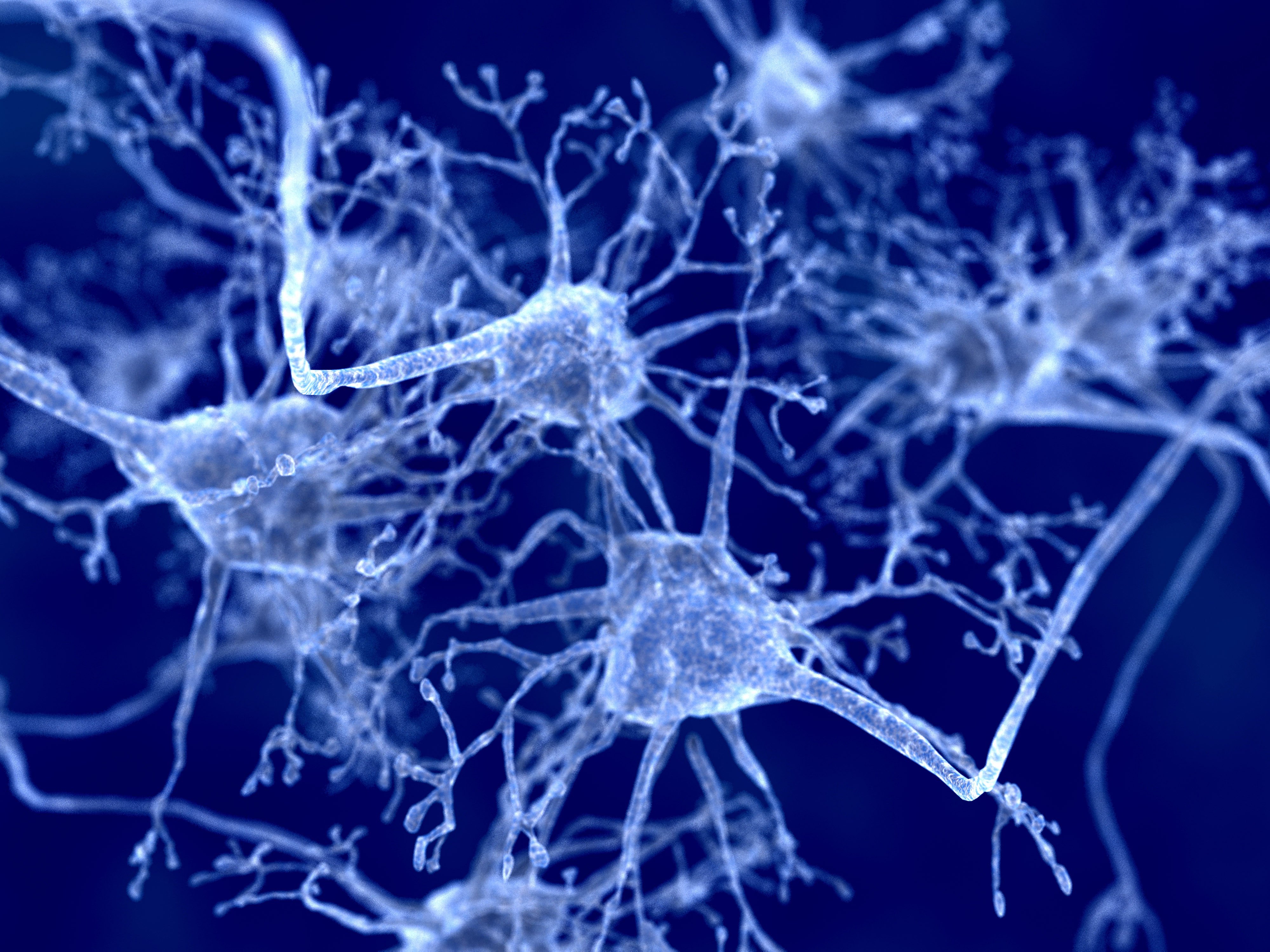 neurons and PARK2 gene
