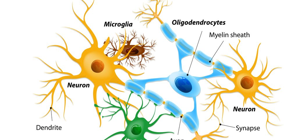 Aberrant Astrocytes May Lead to Parkinson's, Other Diseases
