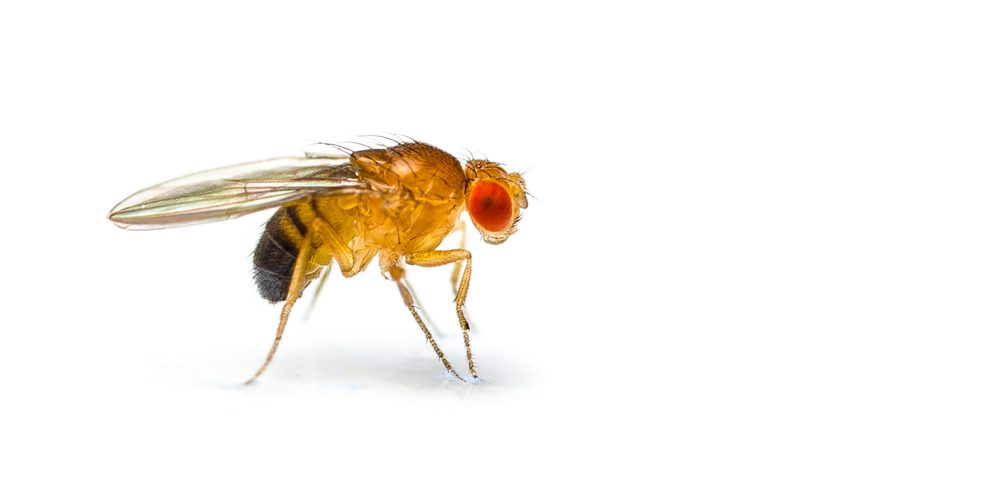 Simple Genetic System Controls Posture-Related Behavior, Insect Study Suggests