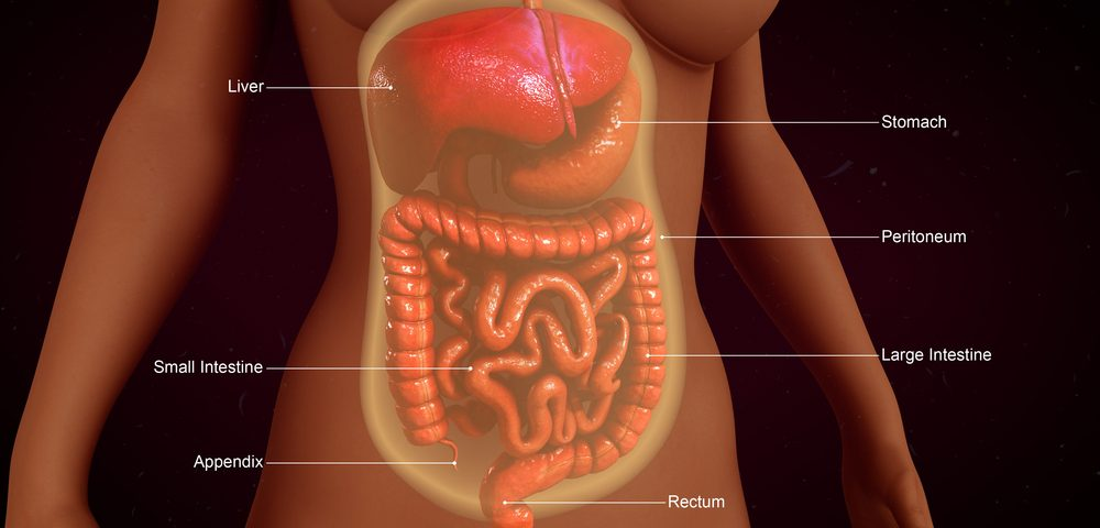 Appendix Removal Early in Life Reduces Risk of Developing Parkinson's, Study Shows