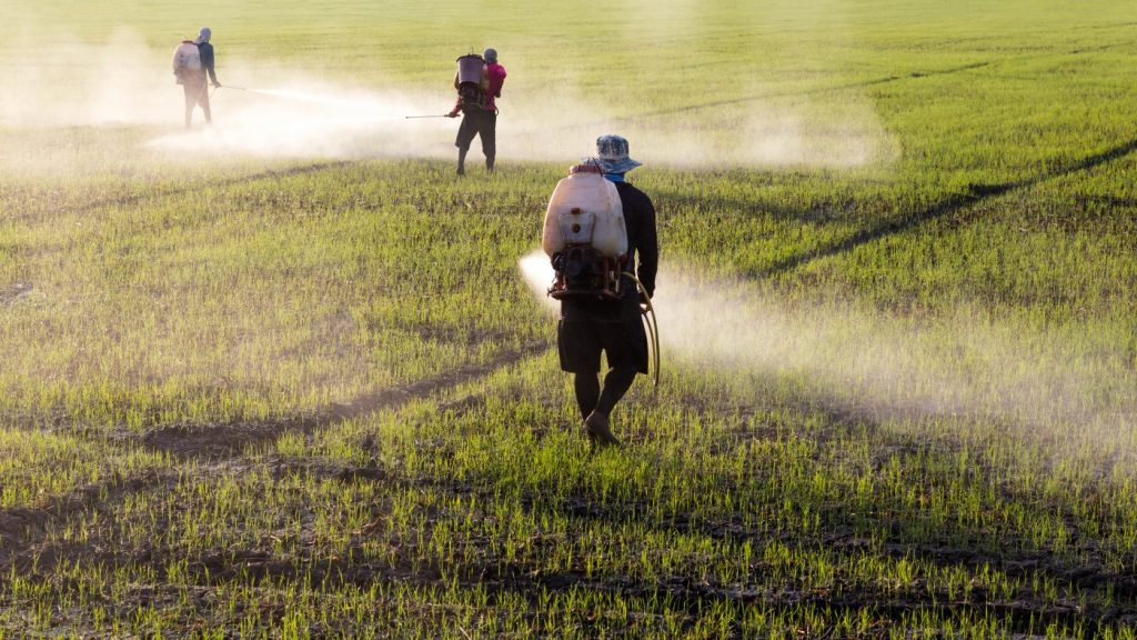 Low Doses of Herbicide and Lectins Led to Parkinsonism in Animals, Study Reports