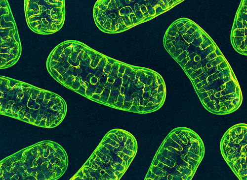 Mitochondria Defects in Brains of Parkinson's Patients Might Play Protective Role