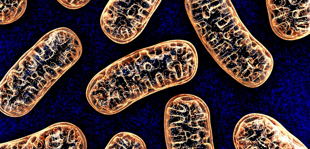 Defects in Mitochondria May Contribute to Parkinson's Disease, Study Suggests
