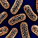 light-activated protein improves mitochondrial function