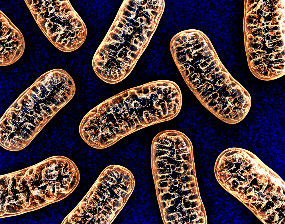 Light-activated Protein Used to Improve Mitochondrial Function, Reduce Parkinson's Symptoms in Fly Study
