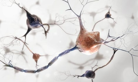 Mutation Plays a Role in Fatty Plaque Formation in Brain, Study Suggests
