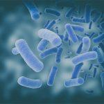 gut bacteria composition