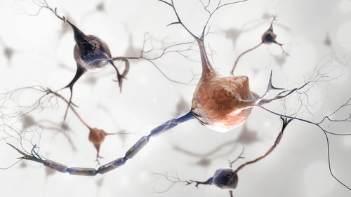 Gene Therapy Preserves Nerve Fibers in Mouse Model of Severe Neurodegeneration