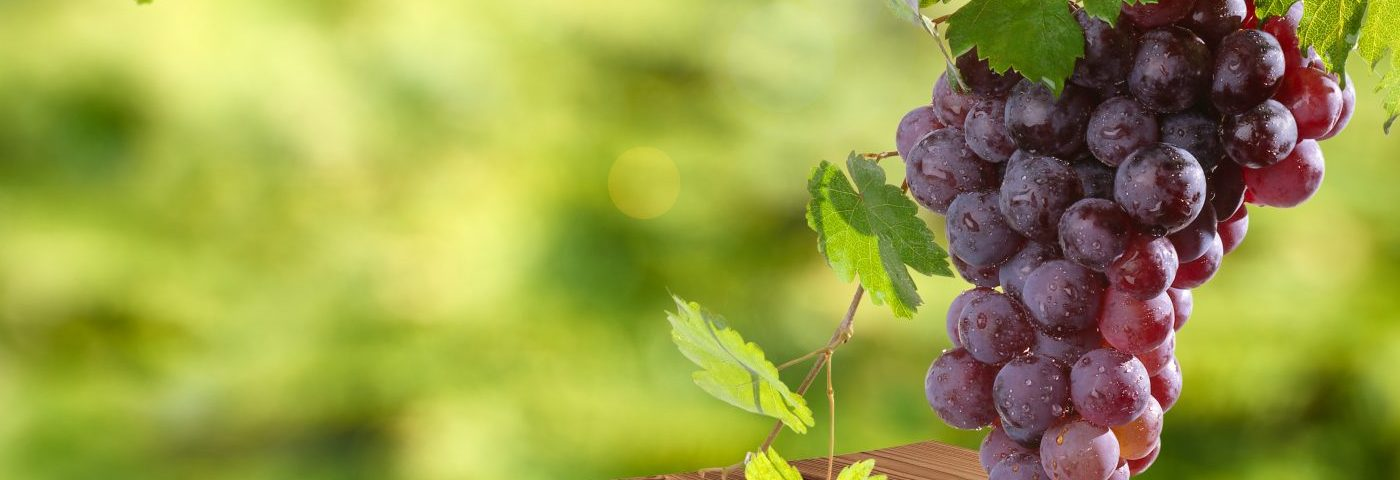 Grape Skin Extract Has Beneficial Effect on Mitochondria in Flies With Parkinson's