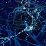 retinol and neurons