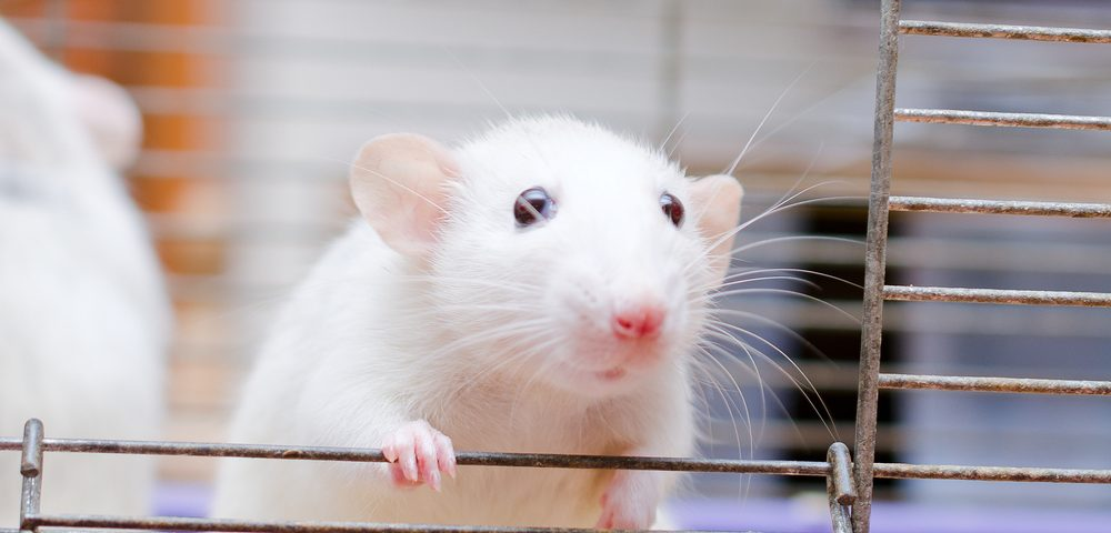 Scientists Can Use Smartphones as Simple, Affordable Way to Measure Tremors in Mice