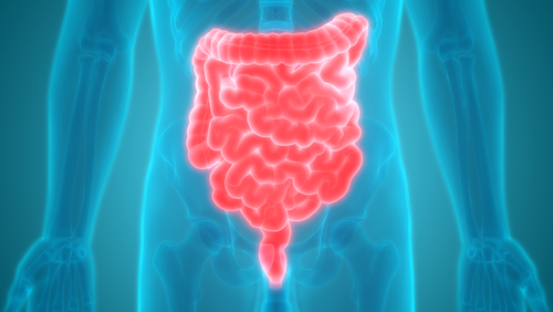 Gut Bacteria Affect Metabolism of Parkinson's Therapy Levodopa, Study Shows