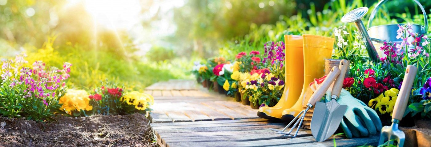 My Safety Tips for Gardening with Parkinson's Disease