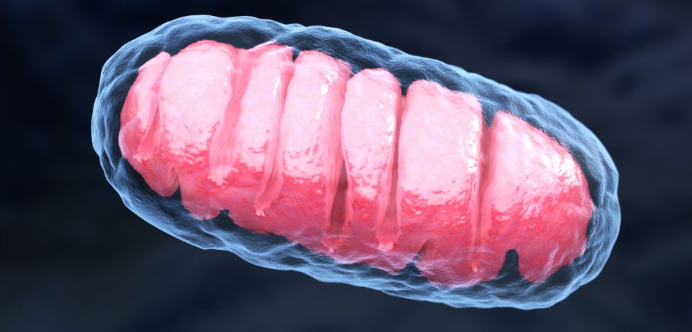 Alpha-Synuclein Impairs ClpP Enzyme, Causing Mitochondrial Damage, Study Says