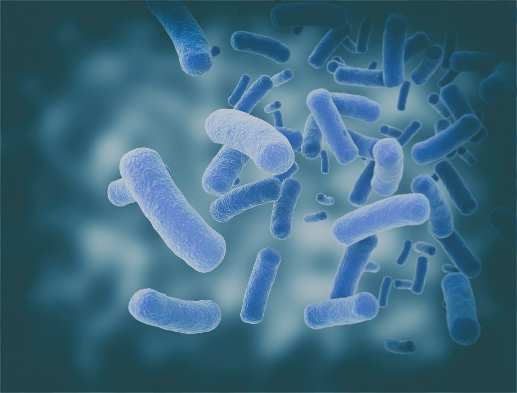 Salmonella Can Form Biofilms, May Be Tied to Disease via Autoimmune Reaction