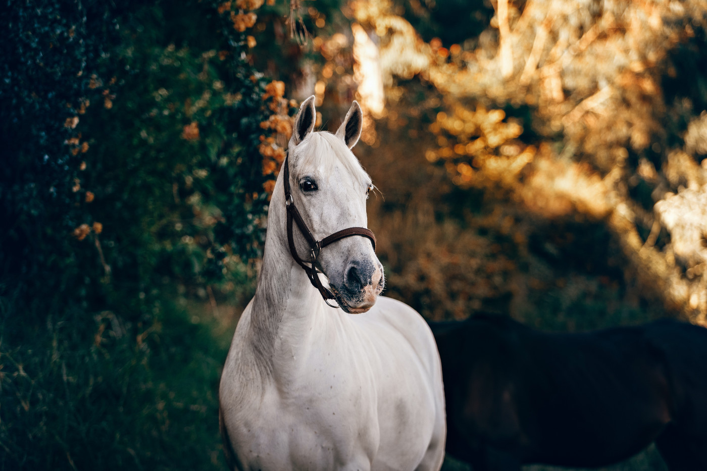 equine-assisted therapy (EAT)