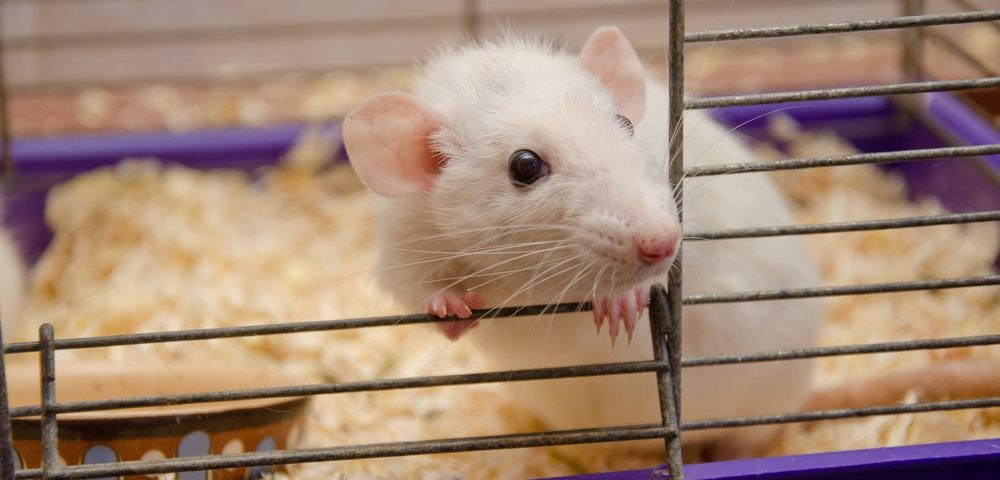Potential Oral Treatment, YTX-7739, Aids Motor Skills in Mouse Model