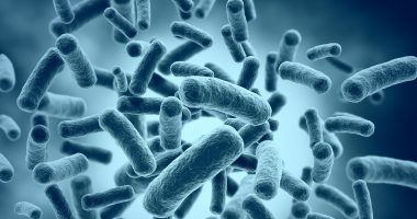 mouth bacteria in Parkinson's | Parkinson's News Today | bacteria in abundance
