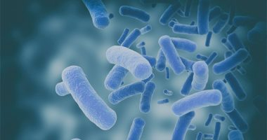 Parkinson's fecal microbiota transplant trial | Parkinson's News Today | gut bacteria and disease